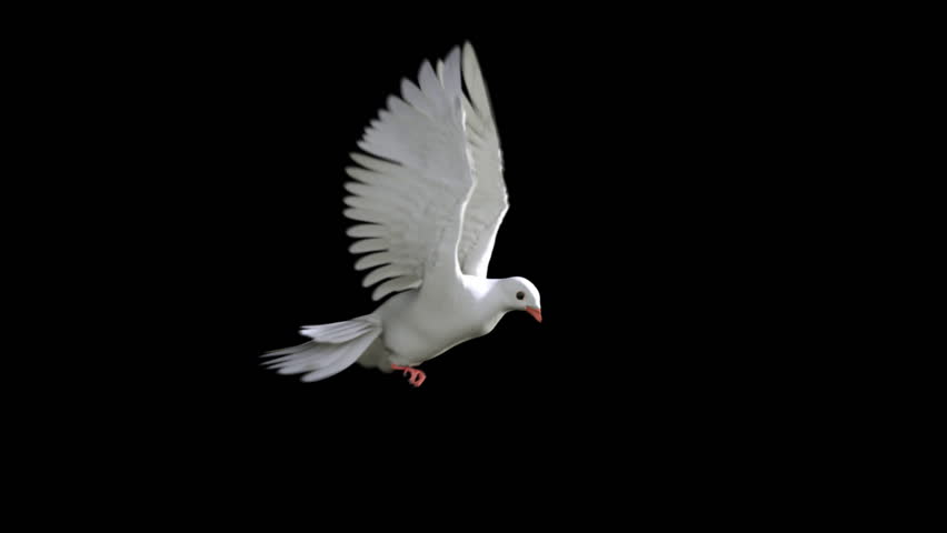 White Dove in Flight #890068