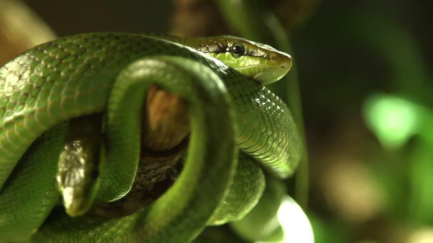 Snakes in a terrarium