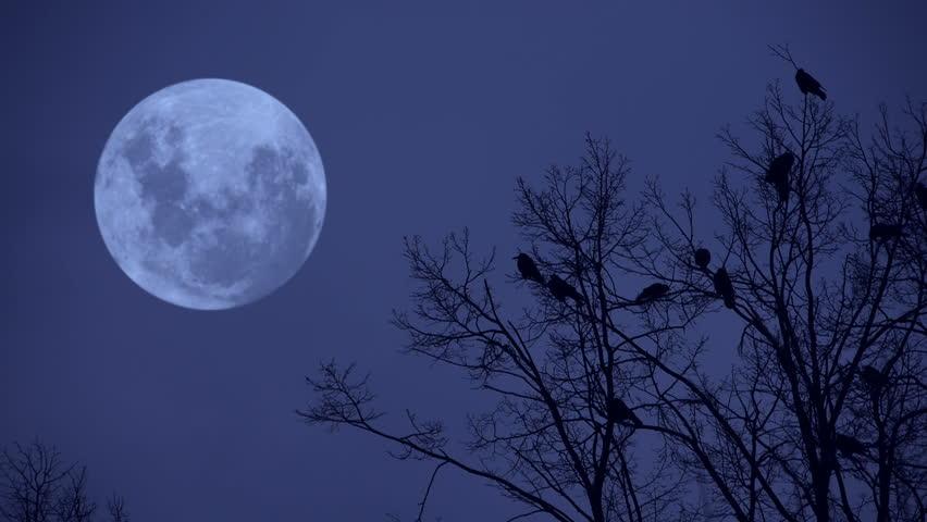 Ravens on the tree at midnight.