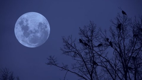 Ravens on the tree at midnight.