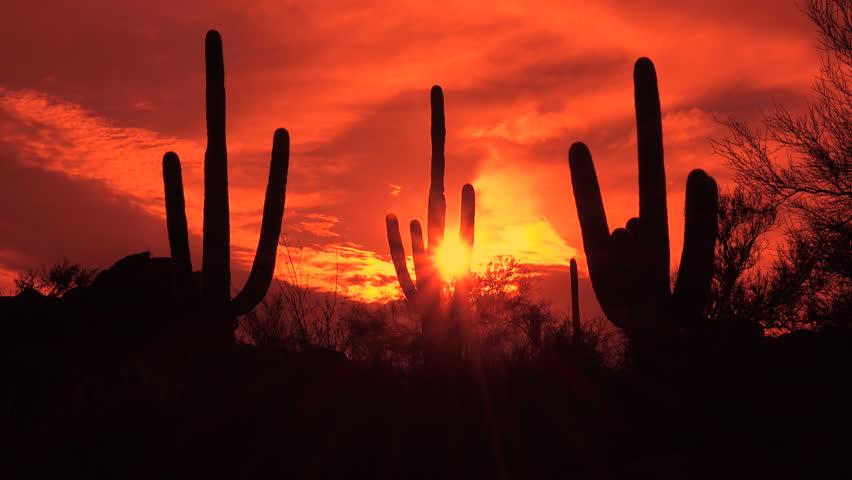 time lapse bright sun lights saguaro cactus prickly pear