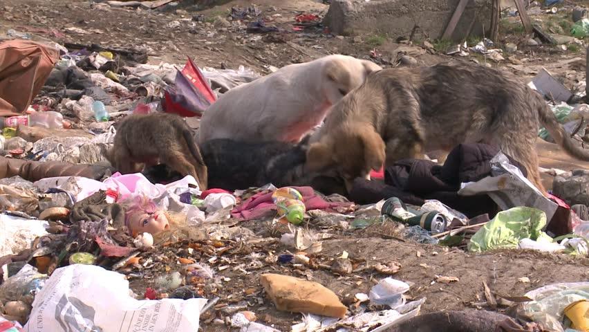 23 35 Dog Eating On Waste Landfill Cause Environmental