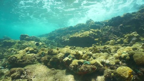 Underwater wave breaking on coral reef and school of fish swimming, viewed from shallow seabed of the Caribbean sea, Panama