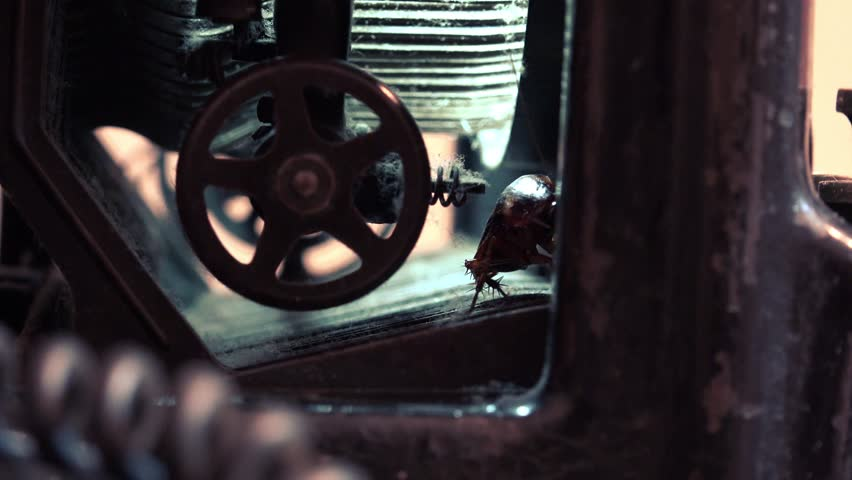 Massive american cockroach, Periplaneta americana, hidden in an old and dusty mechanisms typewriters, real time, 4k, uhd,ultra hd, close up | Shutterstock HD Video #9748808