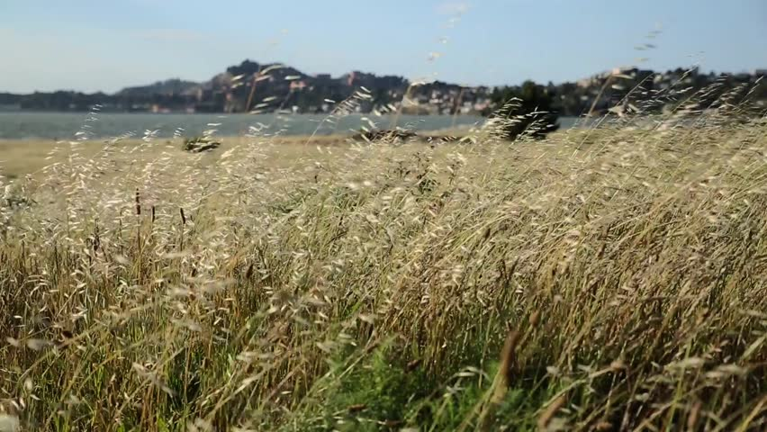 Medium Shot Of Wind Blowing Through The Grass At Point Richmond With  Shallow Depth Of Field. The Sea And Oil Storage Tanks In Background.