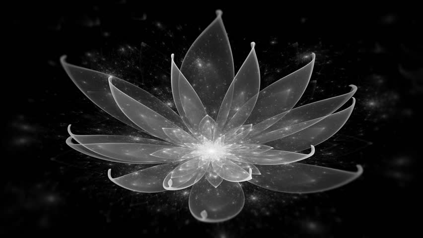 White Lotus Water Lily Enlightenment Stock Footage Video 100